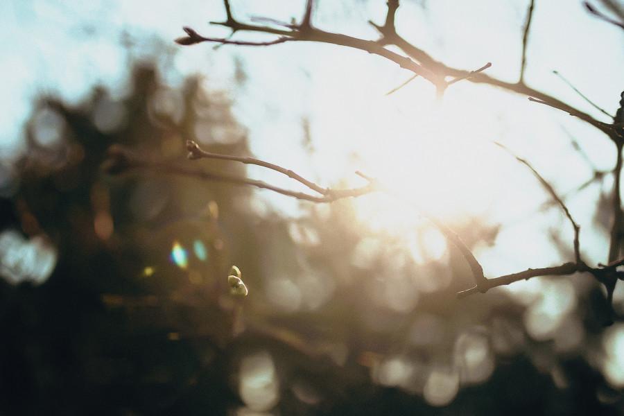 свадебная фотосессия (фотография) в ботаническом саду им. Н.Н.Гришко Киев